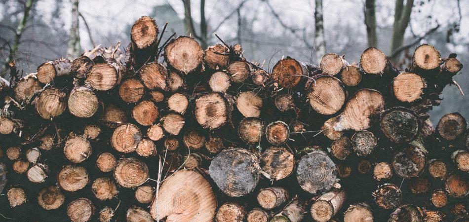 drevodekory